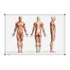 Tabuľa Premium 120x180 cm, ľudské telo v stoji